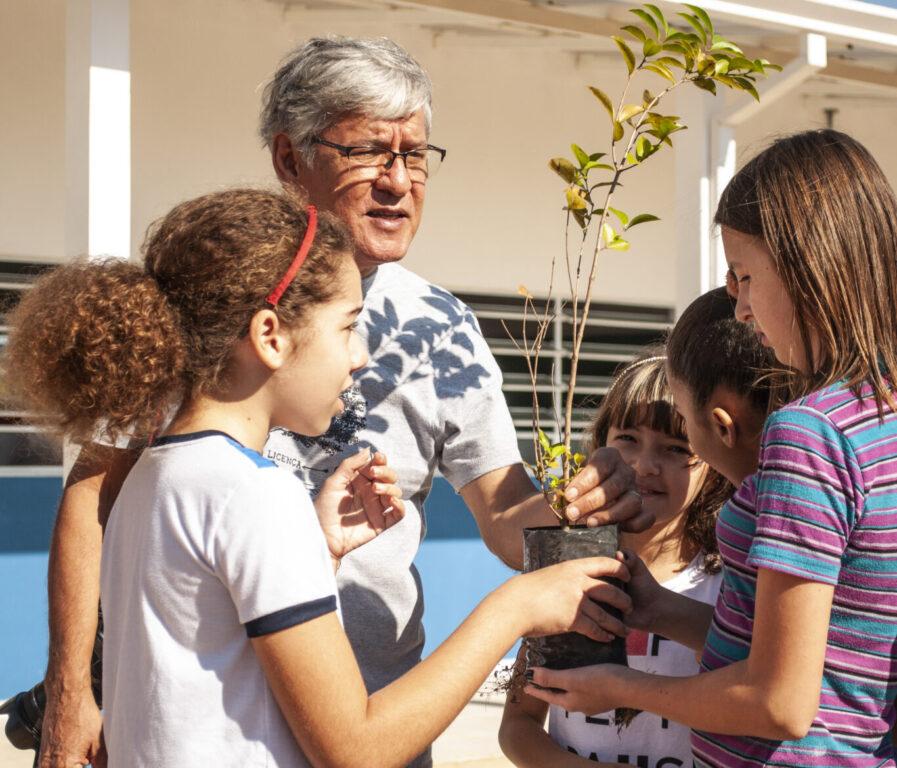 Opte sempre pelo plantio de árvores nativas